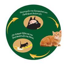 KIRAmore - Kitten Baby Cats | Ξηρά Τροφή 1.5kg