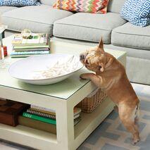 Petsafe Pawz Απωθητής Σκύλου & Γάτας